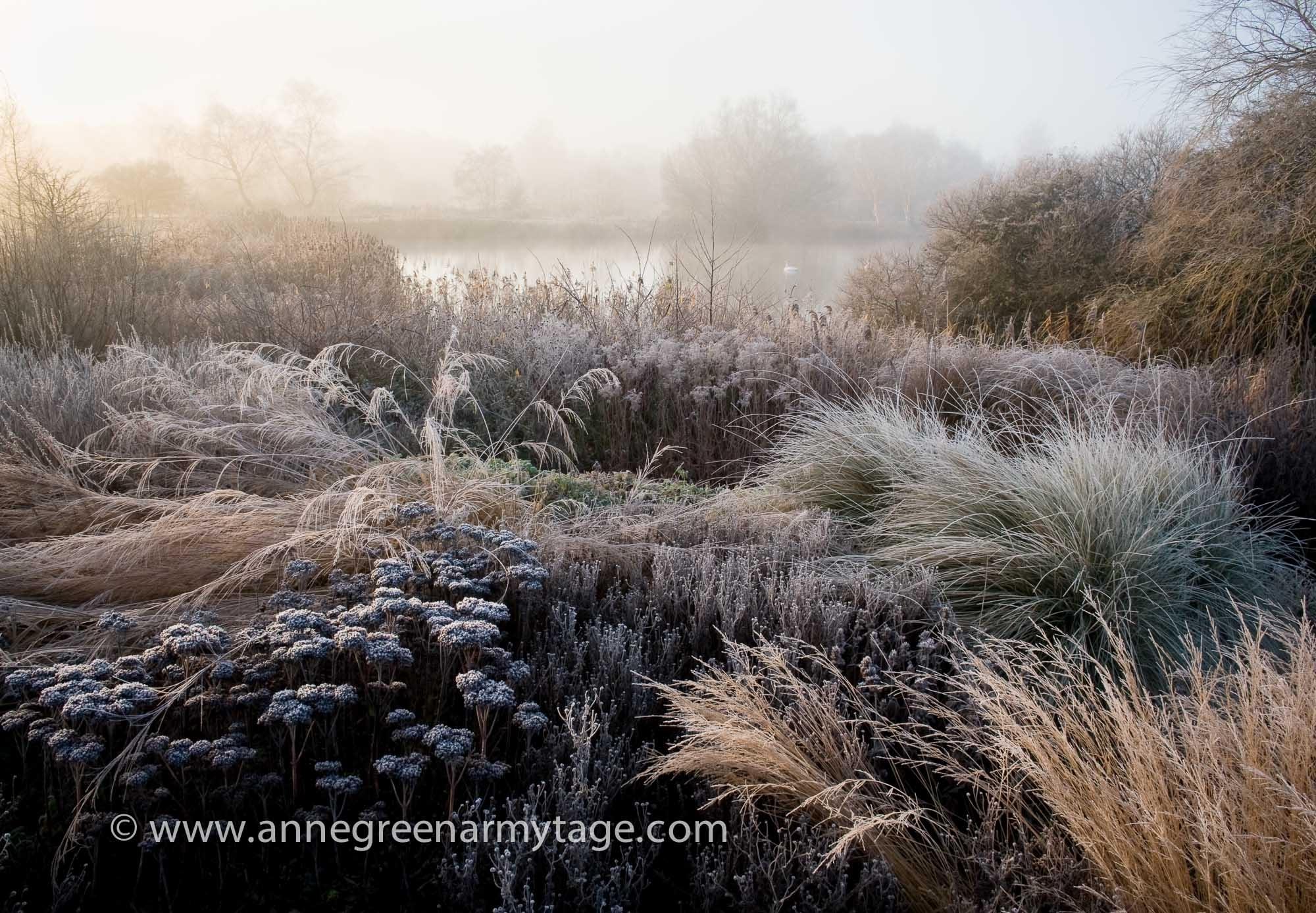 Annie green armytage garden photographer 39 s association for Piet oudolf fall winter spring summer fall