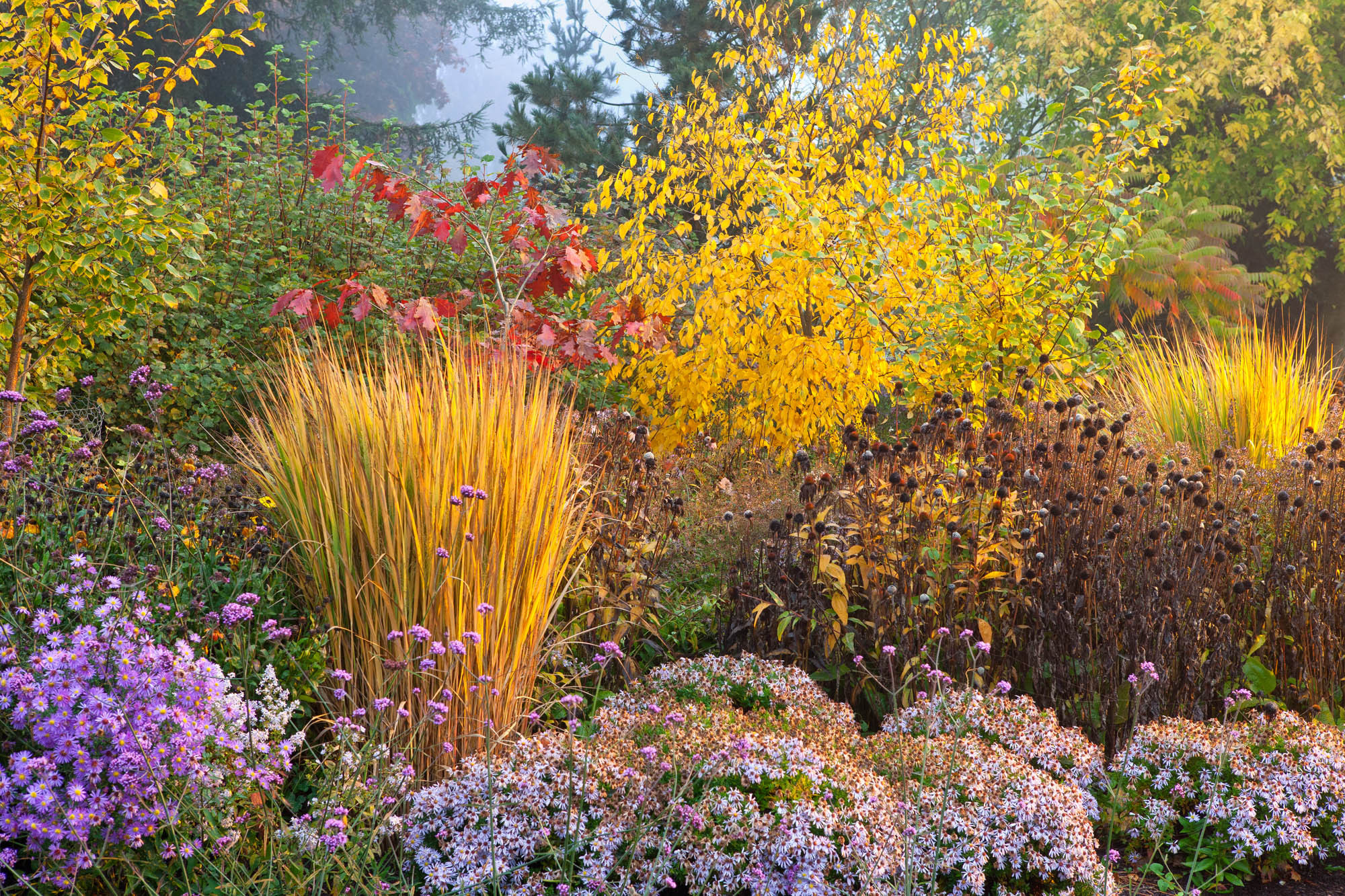 Фото осенних цветов на клумбе