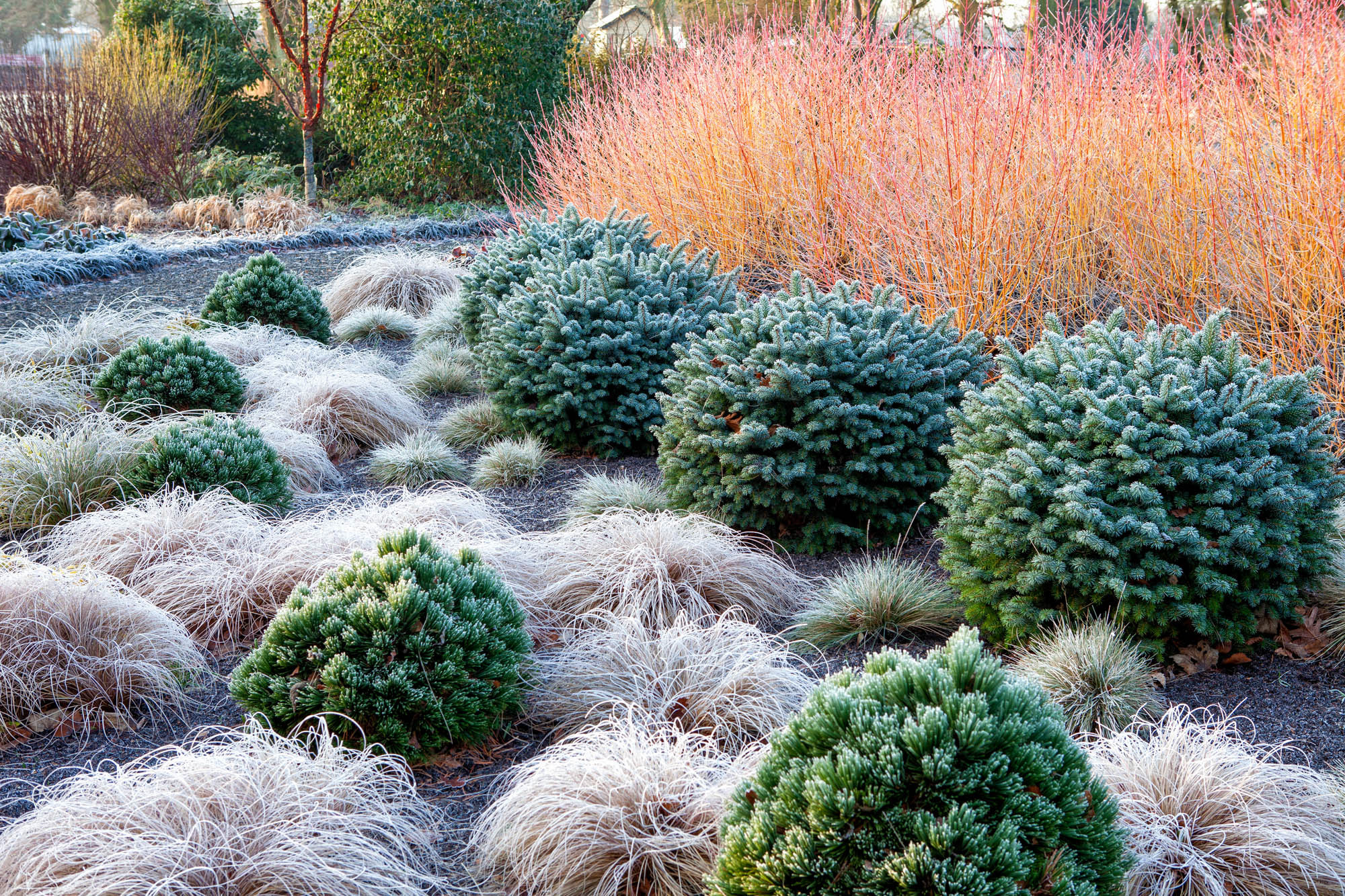 Richard bloom garden photographer 39 s association - Gardening mistakes maintaining garden winter ...