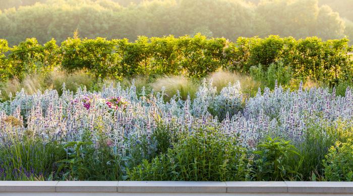 Contemporary Border in a Rural Garden