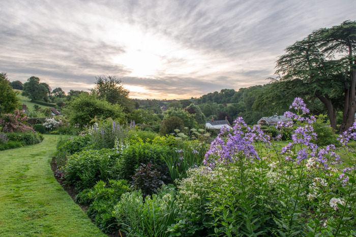 June Borders at Dawn
