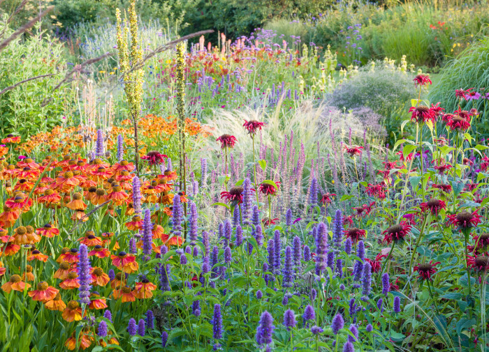 Herbaceous Border at Dawn