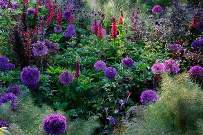 """Purple Dawn"""