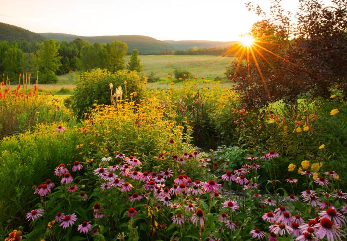Country Garden Sunrise