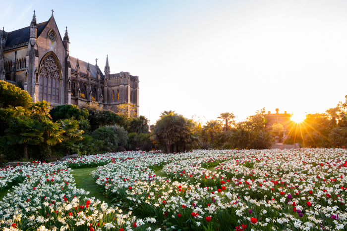 Carpet of Narcissus and Tulips in Arundel Castle Gardens