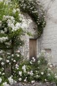 White Rose Arbour