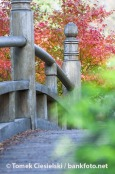 Old bridge in Japenese garden - Wroclaw