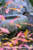 Pot in japanese garden
