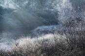 Twigmoor Wood.