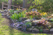The Lakeside Rockery