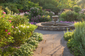 Evening in the Rose Garden