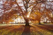 Autumn in Baysgarth Park
