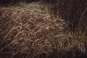 Winter Grasses