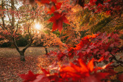 Autumn Glow