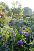 Alliums in May