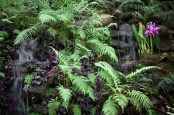 Waterfall in Subtropical Garden Planted with Ferns and Cattleya