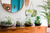Terrariums - Indoor Plants