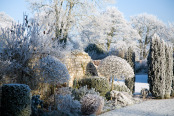 Hoar Frost on Topiary and Trees
