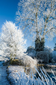 Hoar Frost on Pond and Trees