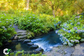 Stepping Stones in a Fast Stream