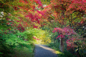Acer Path