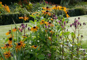 End of Summer Borders