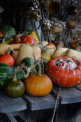 Squash & gourds on a garden table
