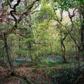 Nightingale Wood