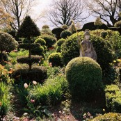 Topiary, tulips and Roman soldier