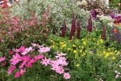 Hardy's Cottage Garden Plants display