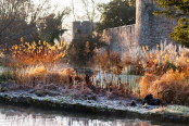 Fire and frost, a November morning at the Bishop's Palace garden in Wells