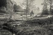 Dormant bog garden, Netherbury