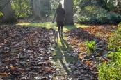 December Stroll
