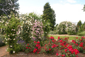 The Gardens of the Rose, Chiswell Green, St. Albans