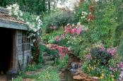 Gorgeous lush spring wildlife garden