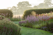 Early morning perennial border with Lythrum salicaria 'Blush'