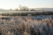 Frosted prairie