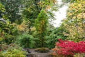 Autumn at The Picton Garden