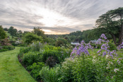 Perennial border at sunrise