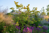 Perennial garden at sunrise
