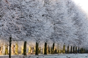 Hoar frost on winter trees