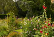 Late Summer Garden at Howick Hall