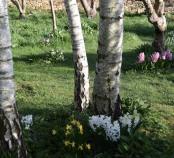 Hyacinth Walk