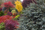 Colourful autumn border