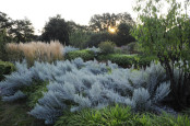 """Dawn in the ""Grass"" garden, late summer"""