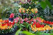 Kew Gardens Orchids festival 2015