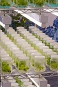 Laboratory propagation of plants