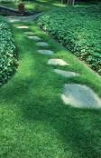Garden path through lawn in shade