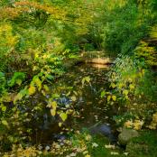 The Autumn Fall