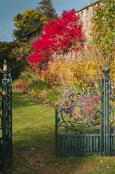 The final flush of Autumn colour